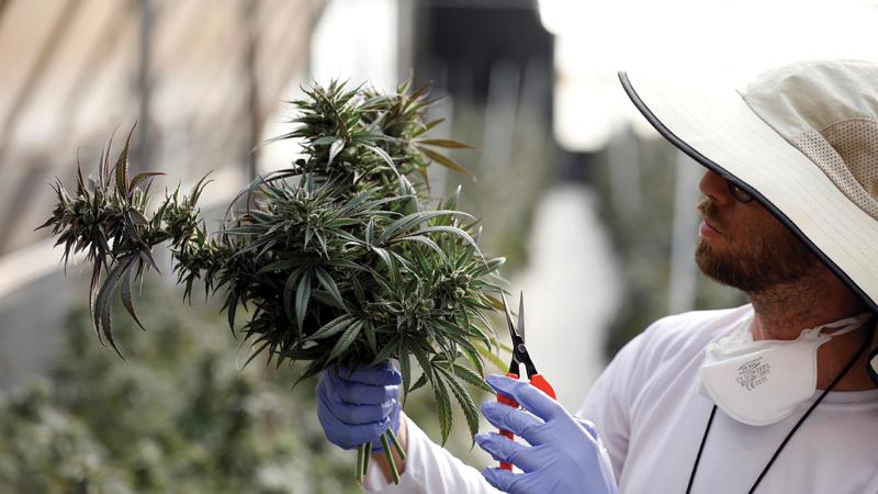 Fenntartható gazdálkodás - CK Medijuana