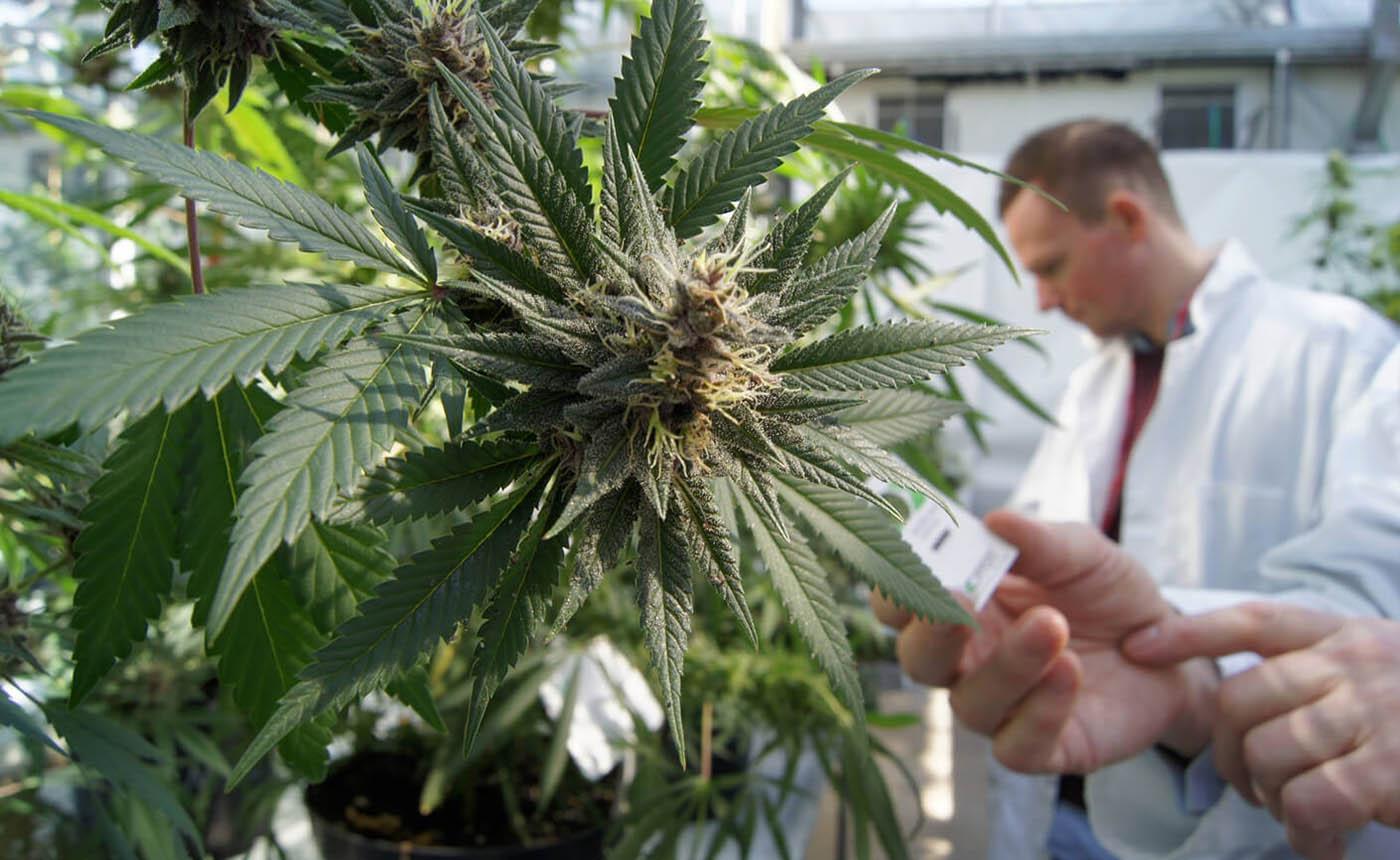 Tisztuló kép a rákellenes tulajdonságokról - CK Medijuana