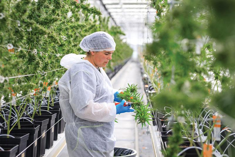 A luxemburgi orvosok felkészültek - CK Medijuana