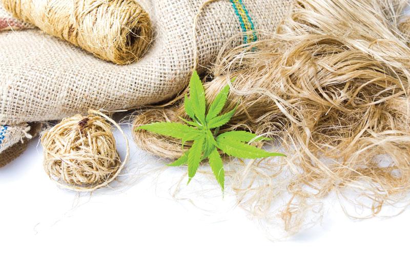 Kendertextil - Gyógyír a divatipar számára - CK Medijuana