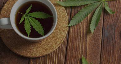 Így fogyaszd a CBD olajat teában