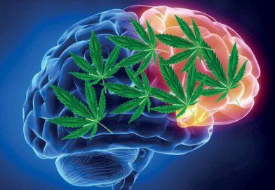 Az orvosi kannabisz 97% arányban csökkentette az epilepsziás rohamok számát